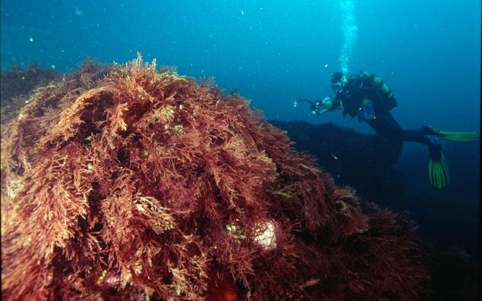 Investigadores europeos desarrollan un nuevo software para evaluar el estado ambiental de los ecosistemas marinos