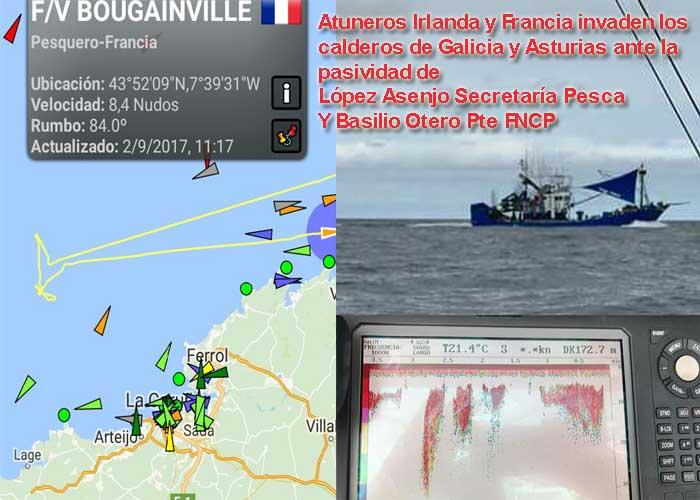 """El Atún del Cantábrico esta siendo """"saqueado"""" por atuneros franceses e irlandeses ante la pasividad de la administración"""