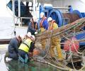 El IEO estudiará la distribución y abundancia de sardina en Galicia y golfo de Vizcaya