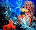 El arrecife de coral es fuente de sustento para casi 500 millones de personas y genera ingresos de miles de millones de dólares del turismo y la pesca